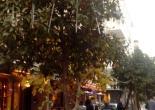 Kültür Mahallesi İtalya Sokakta Yeni Yıl İçin Sokak Süsleme ve Ağaç Işıklandırma Çalışması
