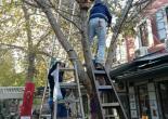 Güneş Mahallesi Anafartalar Caddesi No: 226 Kemeraltı Abacıoğlu İş Hanı, Yılbaşı İçin Ağaç Işıklandırma Çalışması